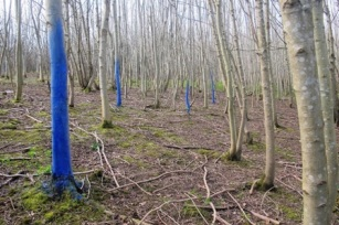 2 blue painted trees re size for email (1)